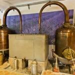 Aromathérapie : remède naturel aux huiles essentielles